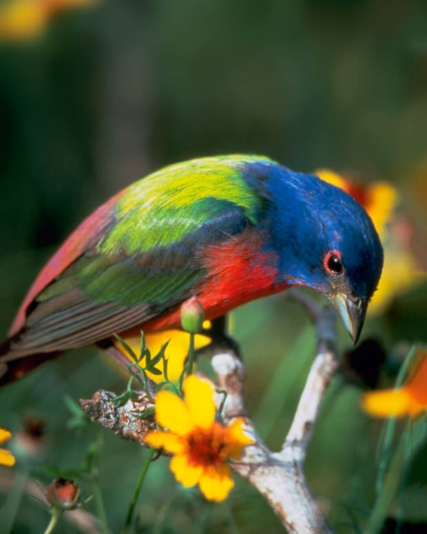 2_Beautiful_Beloved Birds