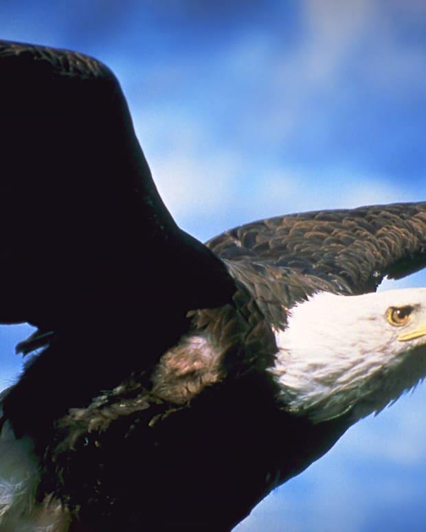 9_Wild Wings